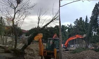 MEB'in ağaç katliamı iddiası… Kaymakamlıktan doğrular nitelikte paylaşım