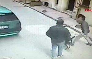 Beyoğlu'nda cep telefonu hırsızlığını köpek önledi