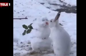 Kanada'daki tavşan yaptığı hareketle viral oldu
