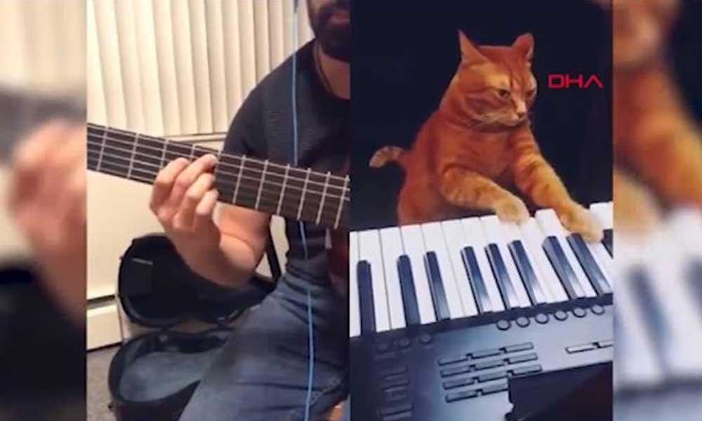 'Piyanist' kedinin caz düeti viral oldu