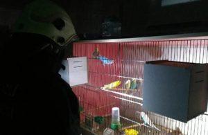 Muhabbet kuşları son anda yanmaktan kurtarıldı
