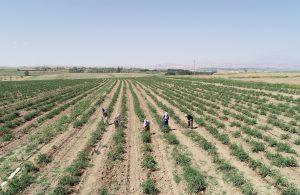 'Kuraklıkta tarım ve sulama yöntemleri değiştirilmeli'