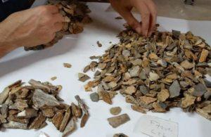 Fransa'da arkeolojik kazıdan 41 bin yıllık Neandertalkalıntısı çıktı