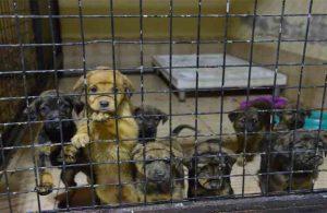Konyaaltı'nda kedi ve köpeklere ısıtıcılı koruma
