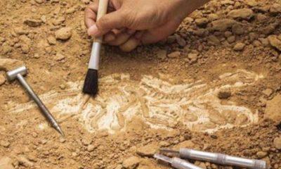 İtalya'da bilim insanlarını şaşkına çeviren keşif: Tam 250 milyon yıllık!