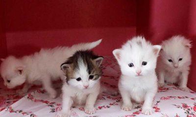 Kedilerin otizmli çocuklara iyi etki ettiği tespit edildi!