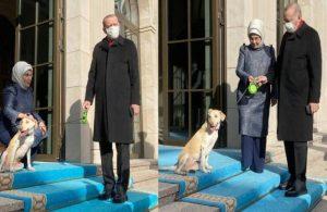 Murat Yetkin yazdı: Erdoğan'ın yeni imaj zorlaması