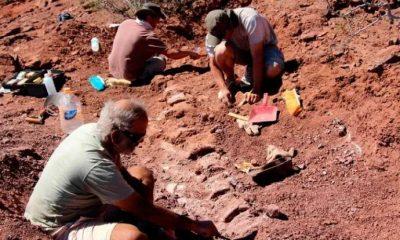 Arjantin'de, dünyanın en büyük dinozor fosili bulundu!