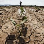 CHP'li Sarıbal uyardı: Gıda krizi kapıda