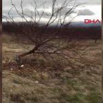 Ağaçlarını kesen kişiyi bulmak için 17 bin lira harcadı: Komşusu çıkınca şaşkına döndü