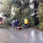 Devrilen ağaçlara belediye ekiplerinden müdahale
