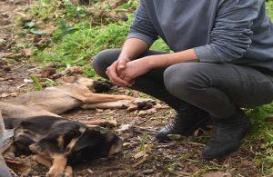 Hayvanseverlerin beslediği 2 köpek zehirlendi, 4 köpek kayboldu