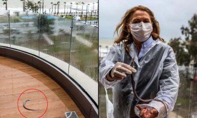 Antalya'da kuvvetli fırtına: Balık balkona çıktı