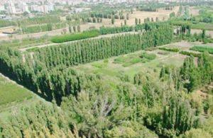 Ata'nın emaneti Atatürk Orman Çiftliği'ndeki kıyım Sayıştay raporlarıyla belgelendi!