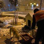 Buca Belediyesi, soğuk havalarda minik dostlarını unutmadı