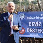 Büyükşehir 77 bin ceviz fidanı dağıttı