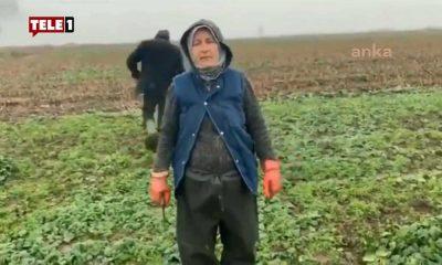 60 yaşındaki çiftçi Erdoğan'a isyan etti: Torunlar elimize bakıyor, bu eziyeti niye çekiyoruz?