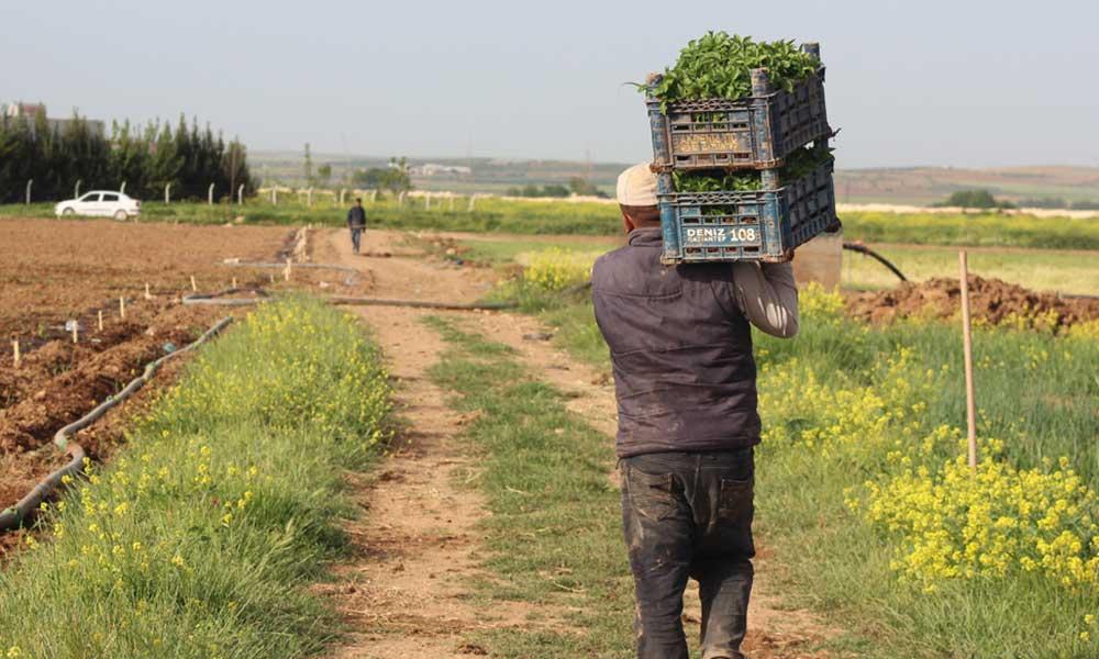 Çiftçiler 2 Şubat'ta Ankara'da buluşuyor: Gariban çiftçinin sesi duyulsun -  Tele1