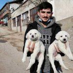 Sosyal medyadan yapılan çağrıyla korumaya alınan 7 köpek sahiplendirildi