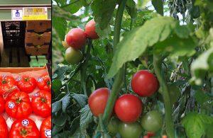 Serada 2 lira olan domates, 10 kilometre ötedeki markette 3 katı fiyatla satılıyor