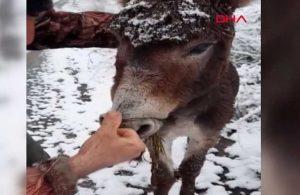 Ağzına tel bağlanan eşek kurtarıldı: Bu hayvanın günahı ne?