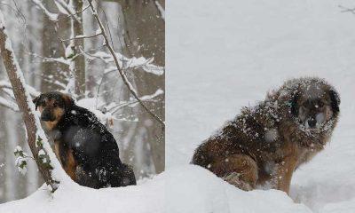 Yoğun kar yağışı nedeniyle sokak hayvanları zor durumda kaldı