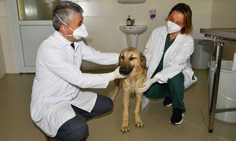 Trafik kazasında ön ayakları feci şekilde kırılan sokak köpeği hayata döndürüldü