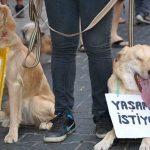 Köpeği öldüresiye dövüp çöpe attı, bin 100 lira para cezası verildi