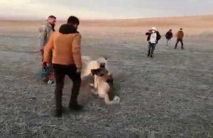 Sosyal medyada tepki toplamıştı! Köpek dövüştüren 5 kişiye 26 bin lira para cezası