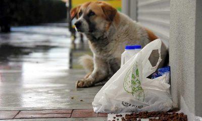 İzmir'de zehirli etleri yiyen sokak hayvanları öldü, mahalleliler harekete geçti