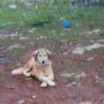 'Fazla ekmek yiyor' bahanesiyle köpeğini öldürdü, bin 33 lira ceza aldı