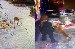 Ankara'da pitbull dehşeti: 2,5 yaşındaki çocuğun korku dolu anları…