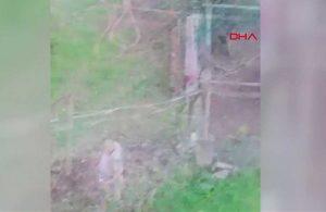 Komşusunun köpeğine sopayla saldırarak ölümüne neden oldu: Benim bahçeme geçemez