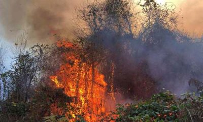 Doğu Karadeniz'de 4 ilde, 23 noktada yangın