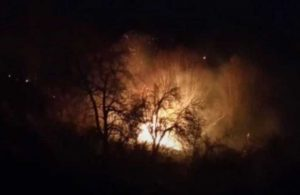 Fatsa'da, ormanlık alanda yangın