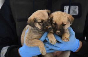 Uludağ'da donmak üzere olan yavru köpekler kurtarıldı
