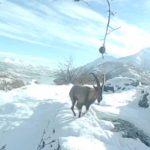 Elazığ'da yaban hayvanları için doğaya yem bırakıldı