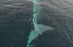 Adana'da görülen balina sosyal medyayı meşgul etti