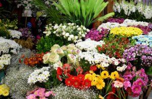 Kayseri'de çiçekçiler, 14 Şubat'ta muaf tutulacak