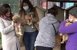 Çav Bella tazminatı sokak hayvanlarına gitti!