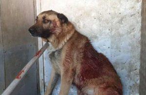 Köpeği yaraladı, 4 taksitle ödeyeceği bin 43 lira para cezası kesildi