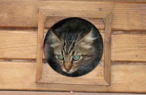 AKP'li belediyeden tepki çeken kedi tebligatı