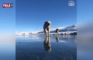 Donan Balık Gölü'nün üzerinde oynayan köpekler görenleri gülümsetti