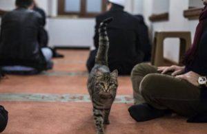 'İmamlar kedi sahiplensin' önerisi