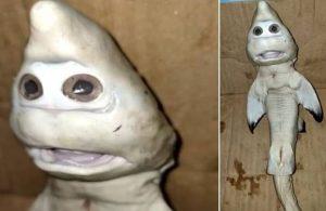 Endonezya'da bulundu: Mutant balık 'insan yüzüyle' doğmuş!