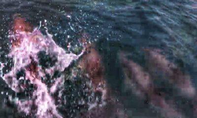 Denize açılan genç teknesiyle yarışan yunusları görüntüledi
