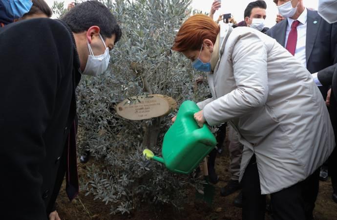 Akşener, hayatını kaybeden sağlık çalışanları için fidan dikti