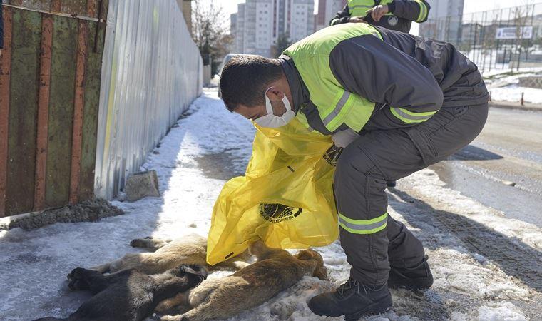 Ankara'da 3 yavru köpek ölü bulundu