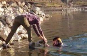 Baraj gölüne düşen güvercini soğuğa aldırmadan kurtardı