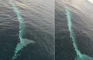 Adana açıklarında 15 metrelik balina